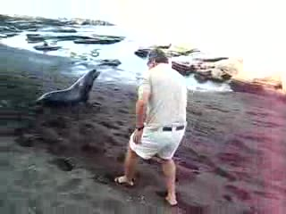 Tourist gets chased by a sea lion on the beach and defends himself by throwing stuff at it... sorry but the sea lion was there first mate!