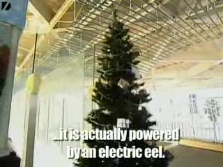 An Eel powered Xmas